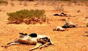 Afrique : face au changement climatique