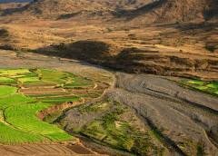 Les répercussions liées au COVID-19 contribuent à aggraver la faim aiguë dans les pays déjà touchés par une crise alimentaire