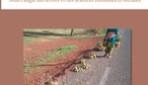RÉFLEXIONS SUR LE DÉVELOPPEMENT DURABLE EN AFRIQUE
